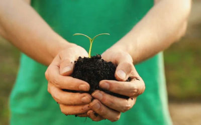 The Green Fund to Facilitate Investment in Green Initiatives